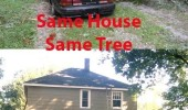 A tree lands on top of two cars. Same guy, same house, same tree. 42 weeks apart.