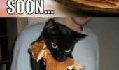 A funny picture of a black cat that ate a pancake. Soon... I regret nuffin'.