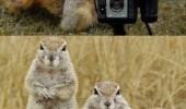 A funny picture of a squirrel taking a photograph of squirrels. Say cheez.